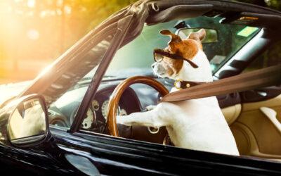 La sécurité routière au travail, sommes-nous vraiment tous de bons conducteurs ?