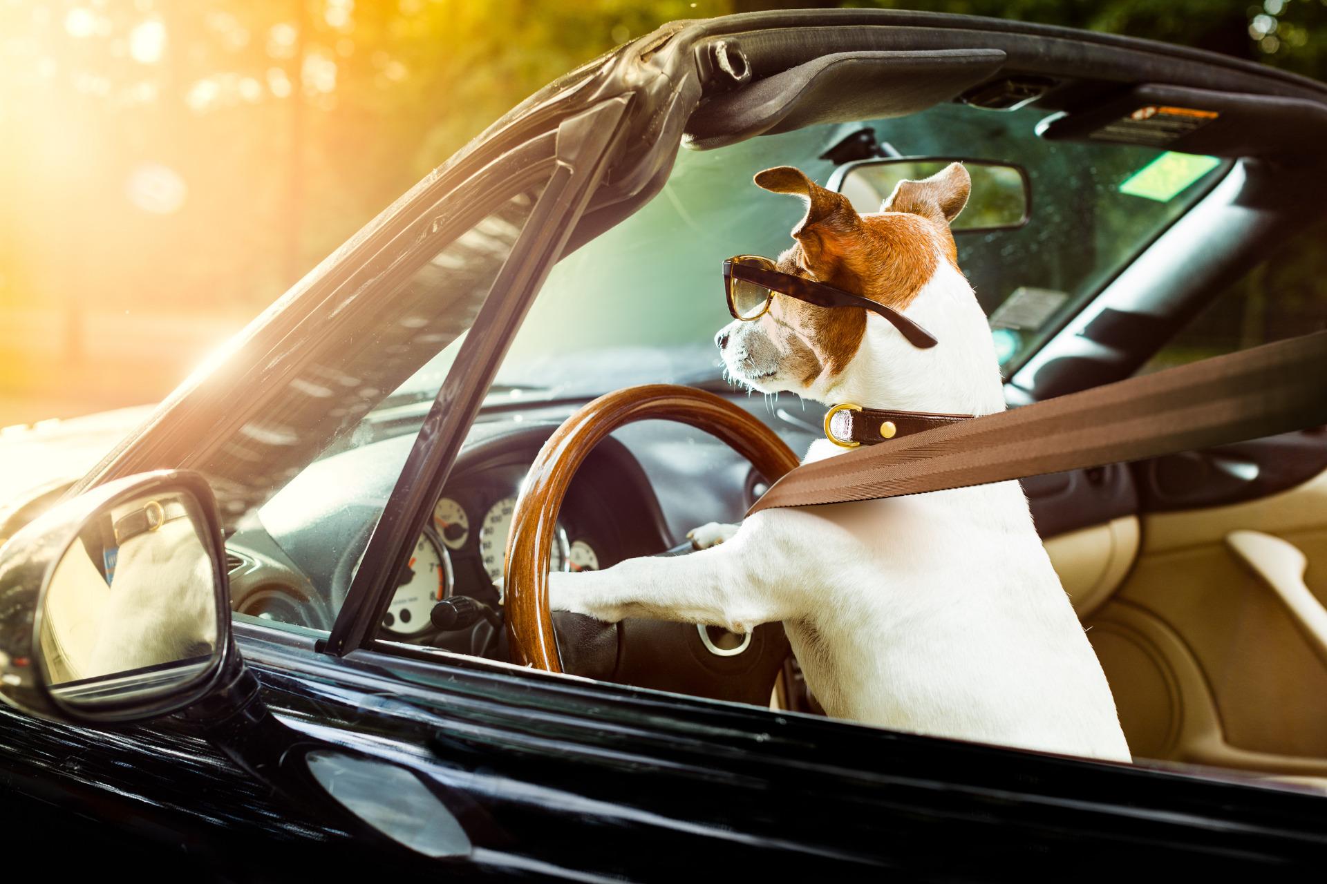 Focus mensuel : La sécurité routière au travail, sommes-nous vraiment tous de bons conducteurs ?